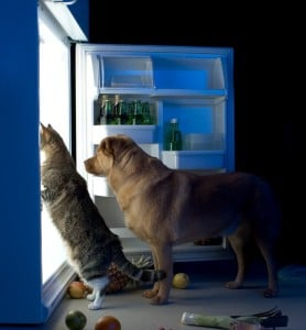Dog and cat nutrition
