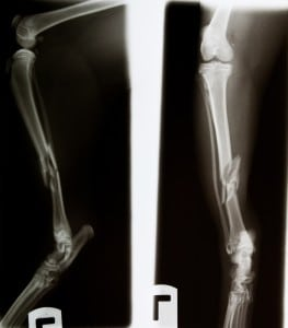 Orthopaedic conditions in dog and cats
