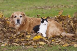 Active Pet OA