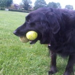 ...and enjoying playing with his ball!