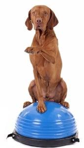 Veterinary Rehabilitation 1