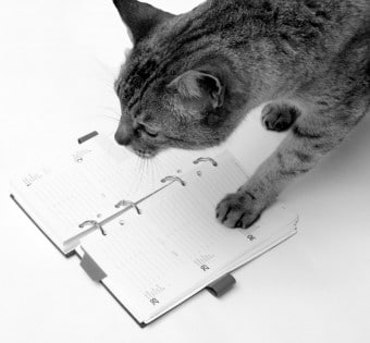 Cat with diary for first appointment