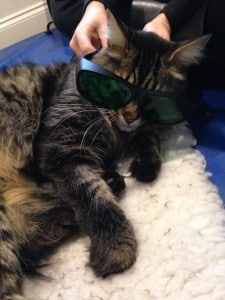 """The glasses are definitely cool for cats"""