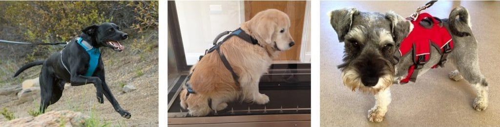 well fitting dog harness