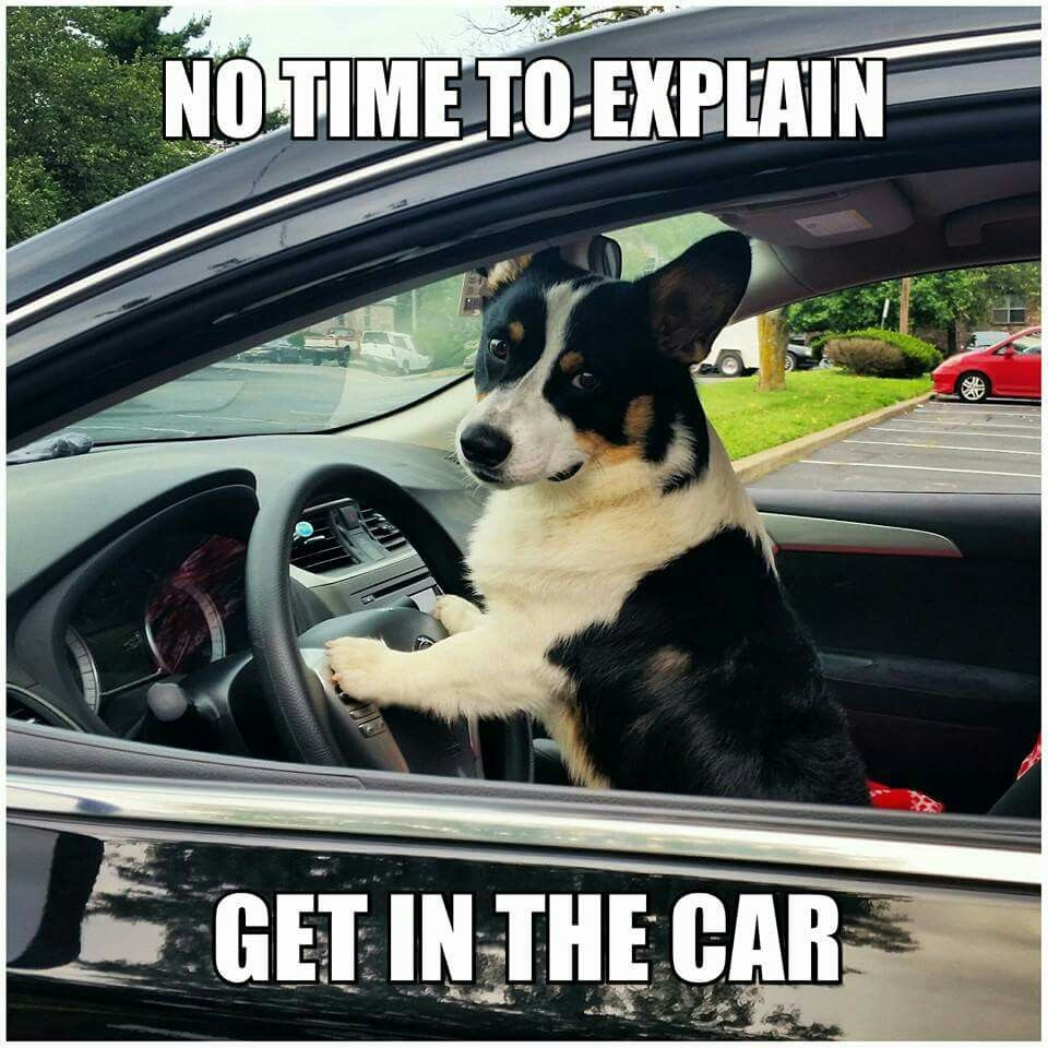 Dog at car wheel - drive safely to your appointment and leave in plenty of time.